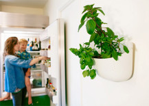 indoor vertical garden planter on kitchen wall
