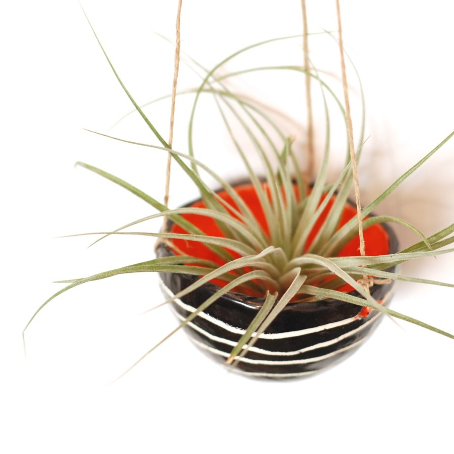Black and orange hanging planter from McCheek's Mayhem