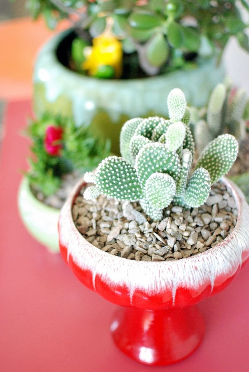 Colorful vintage containers hold succulents in the home of Kimi Encarnacion