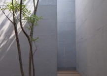 Courtyard-with-tall-walls-and-a-tree-growing-through-the-deck-217x155