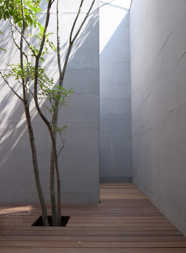 Courtyard with tall walls and a tree growing through the deck