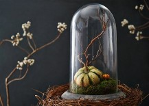 Miniature-pumpkin-with-mossy-bed-under-a-cloche-217x155