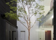 Narrow courtyard with a single tall tree 217x155 16 Minimal Courtyards with Just a Hint of Nature