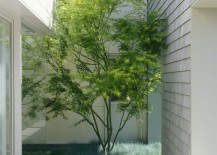 Small courtyard with just enough room for a tree 217x155 16 Minimal Courtyards with Just a Hint of Nature