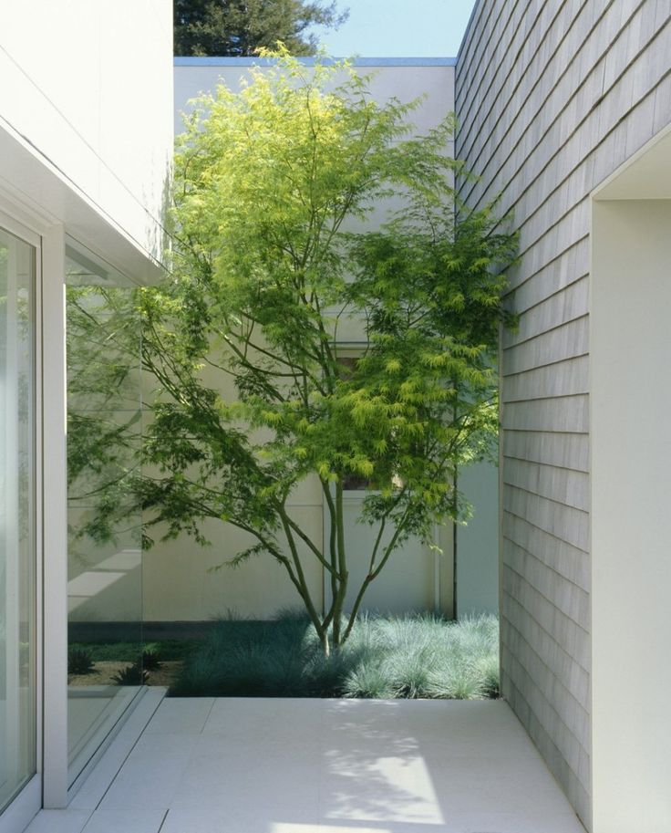 Small courtyard with just enough room for a tree