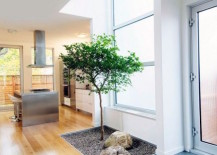 Small natural area for a tree inside a home