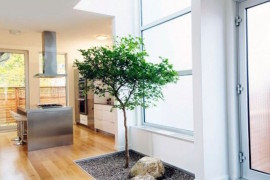 Small natural area for a tree inside a home  16 Minimal Courtyards with Just a Hint of Nature Small natural area for a tree inside a home