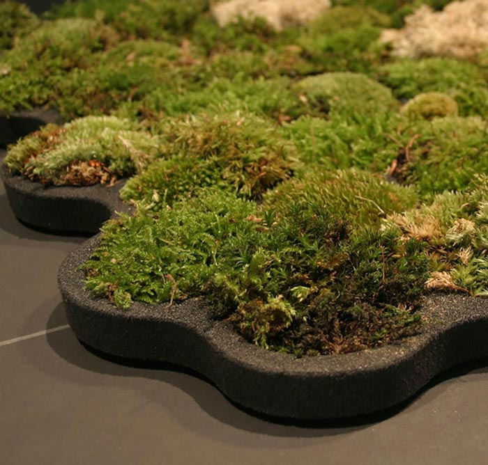 The moss thrives on the warm dampness of your bathroom