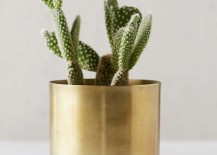 Flowering cactus in a metal planter from Urban Outfitters