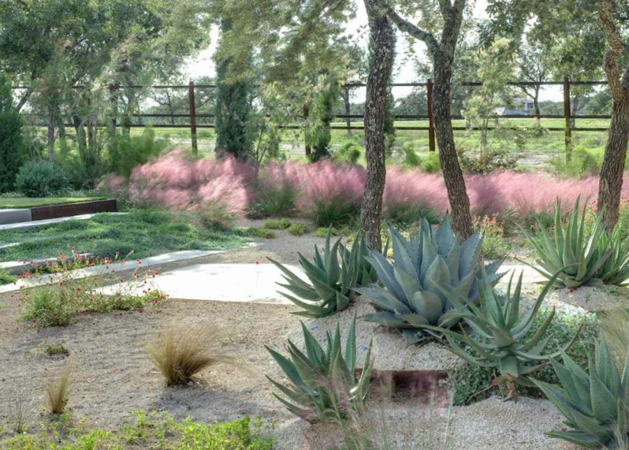 Gulf muhly in a modern yard