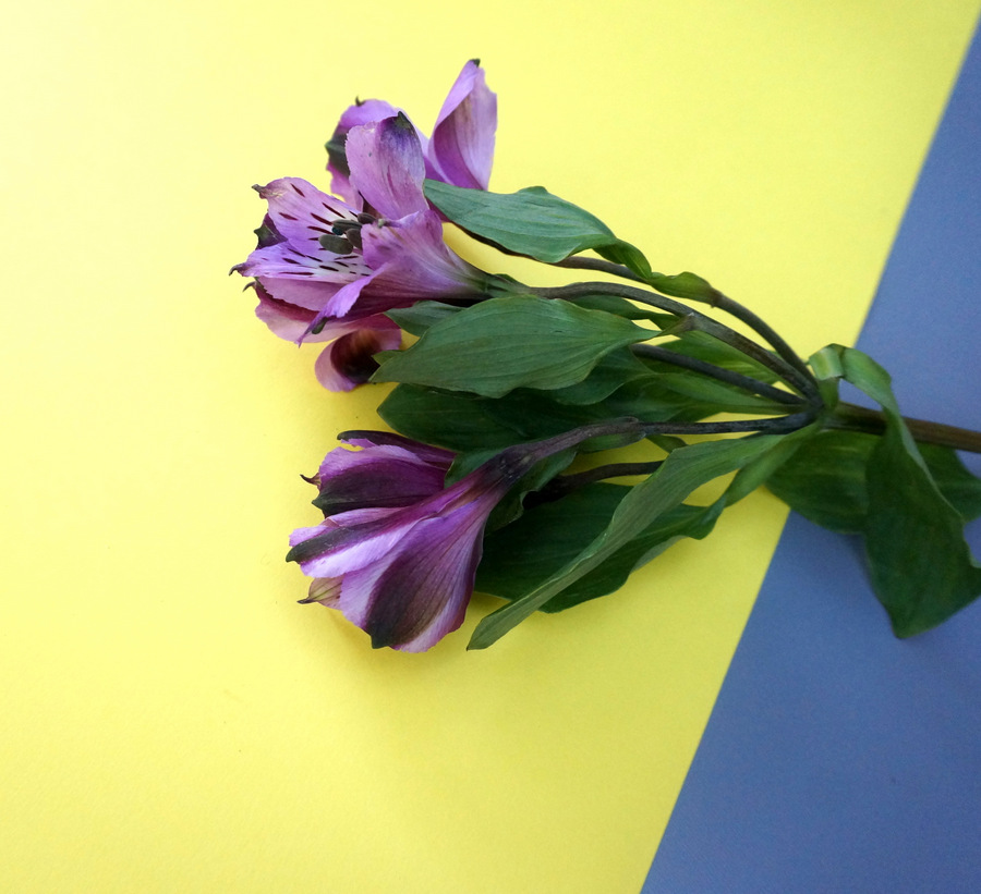 Purple alstroemeria make a regal statement