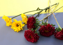 Red-and-yellow-flowers-create-a-lovely-contrast-217x155