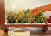 A small herb garden in the kitchen serves you in more ways than one