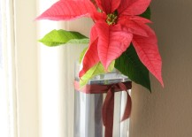 Poinsettias in glass or plastic container with ribbon