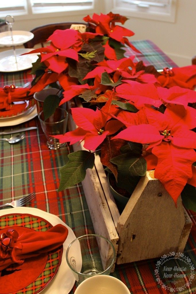 Rustic holiday tablescape with poinsettias in wood planter box