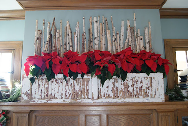 Rustic poinsettia displayed on fireplace mantel
