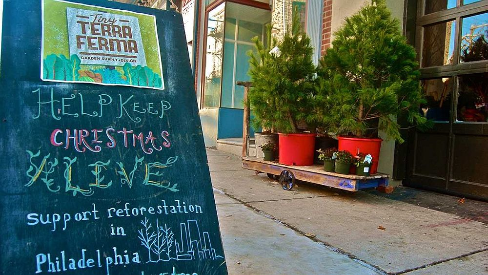 Buying live Christmas trees allows you to replant them in the garden [From: Tiny Terra Ferma / newsworks]
