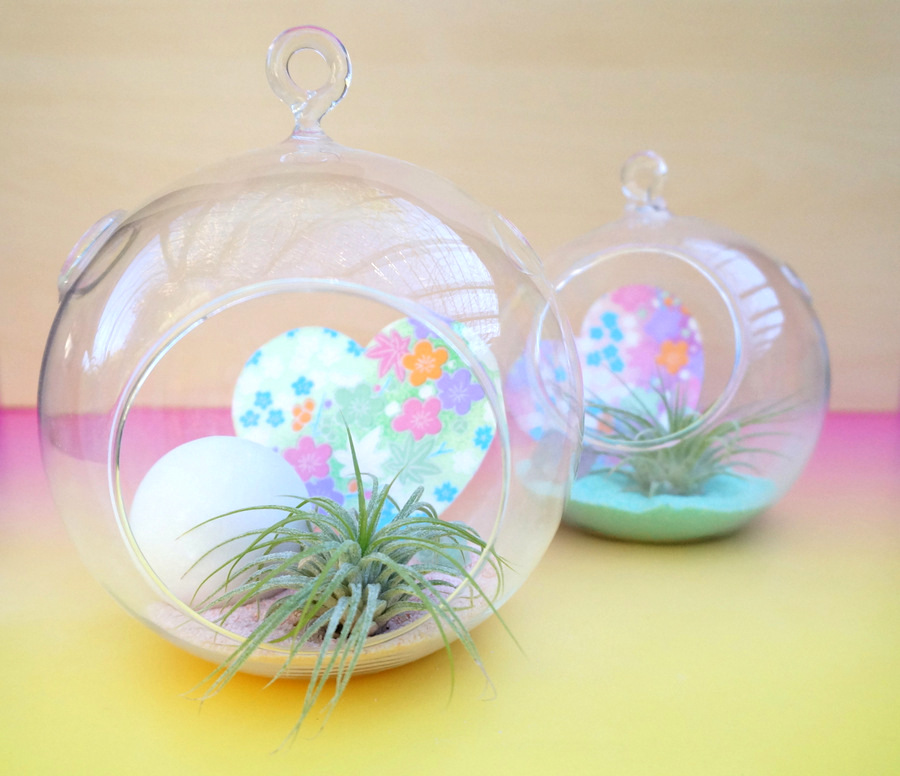 DIY pastel air plant terrariums