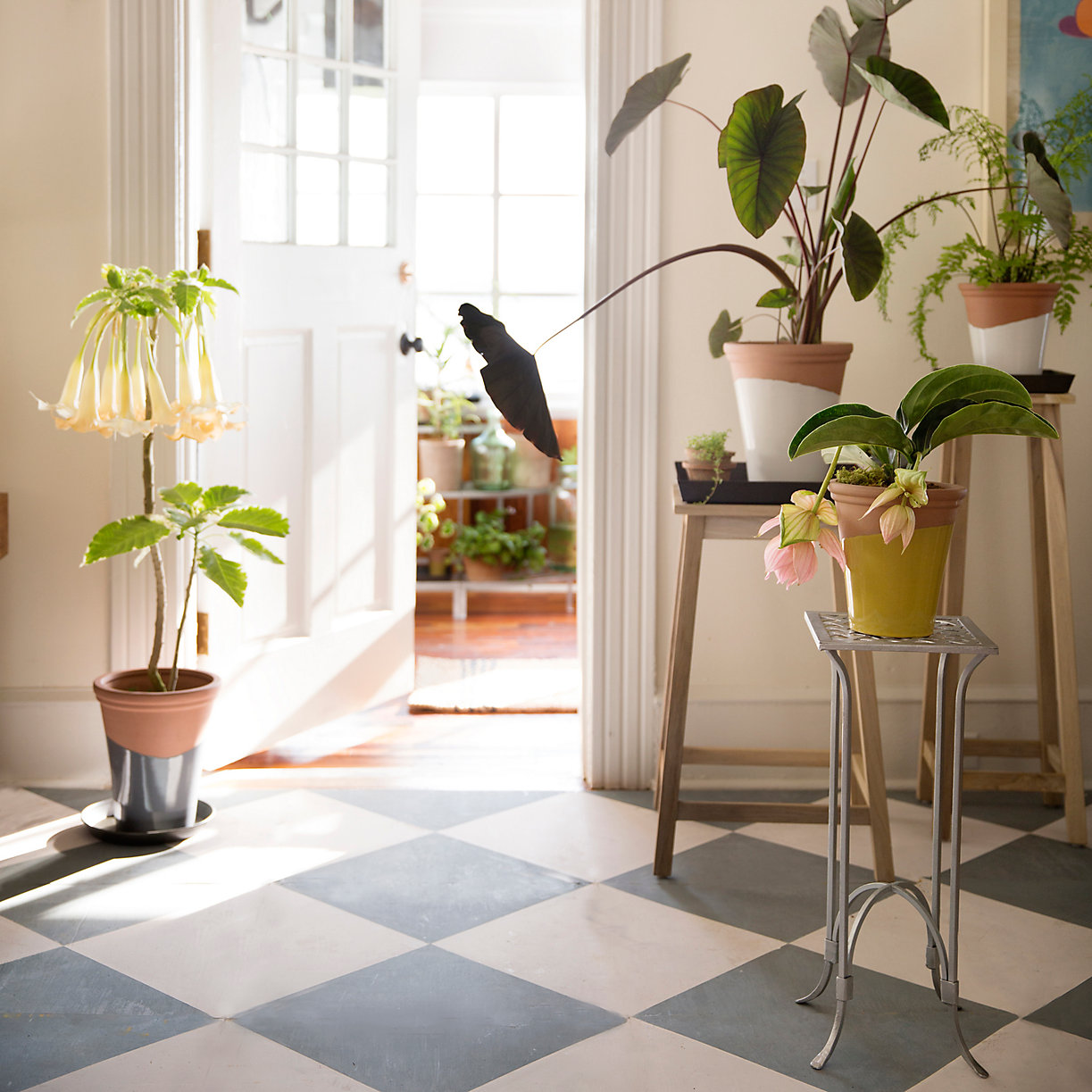 Potted plants on a checkered floor