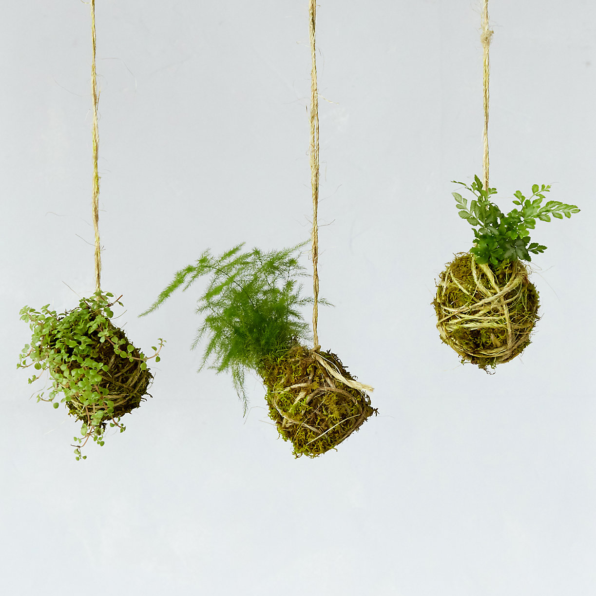 String garden from Terrain