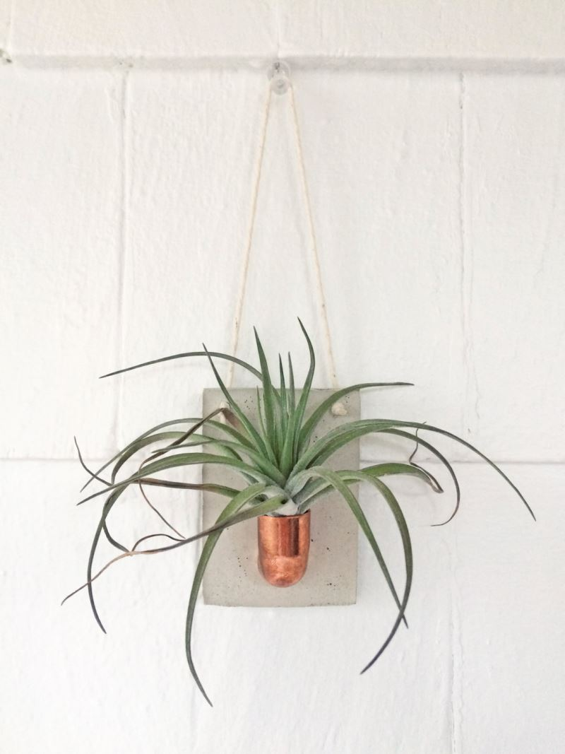 Air plant holder from Etsy shop Etta & Odie