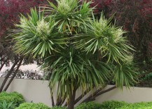 5 Low Maintenance Plants For Landscaping