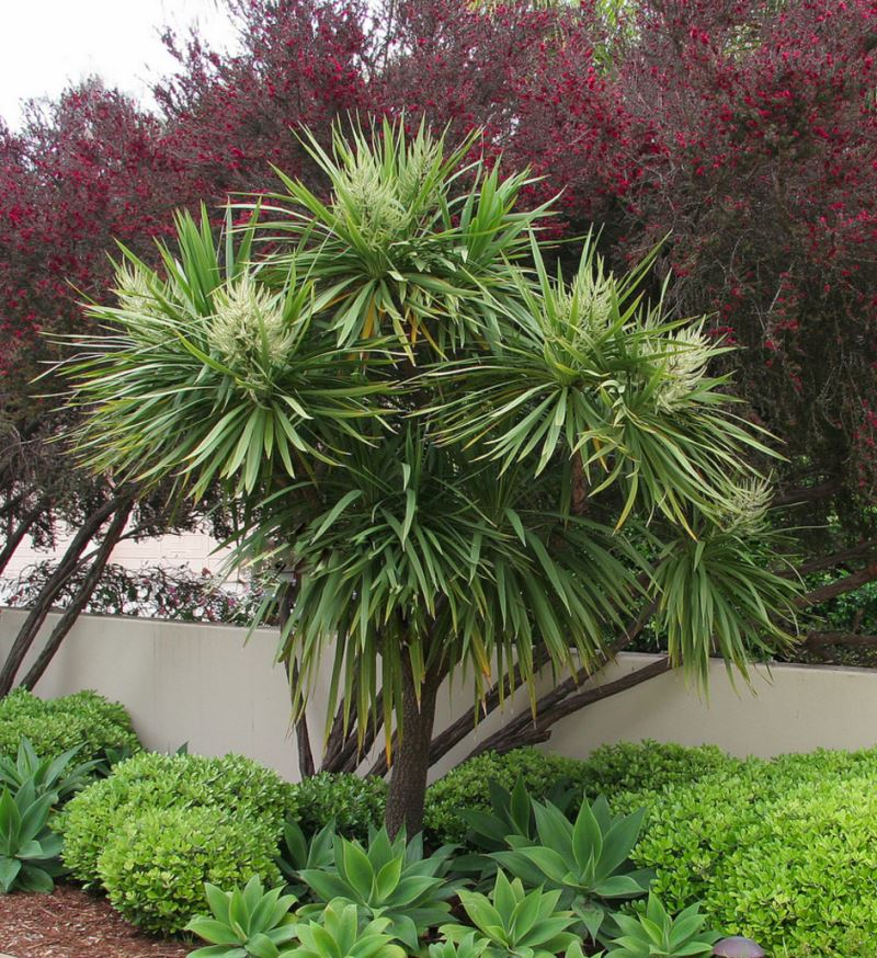 Caring For Tropical Plants Part - 22: View In Gallery Pittosporum At The Base Of A Tree