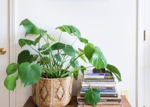 Plant in a basket featured at Apartment Therapy