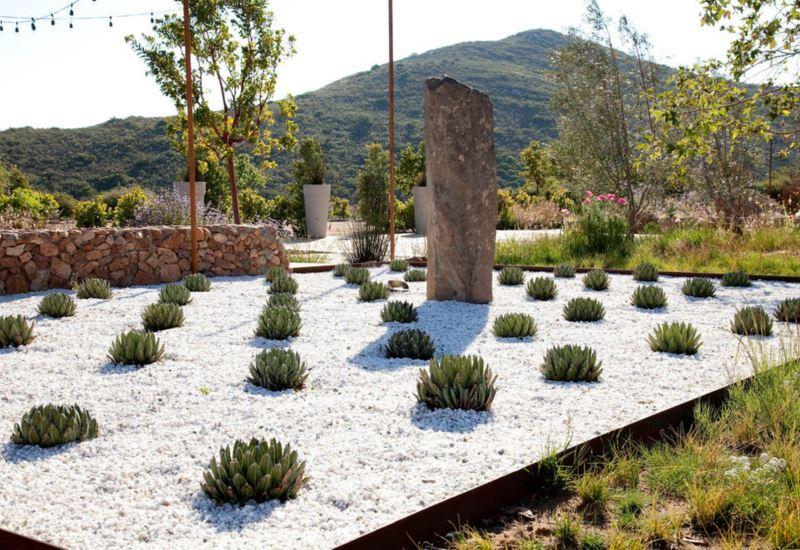 Queen Victoria agave in a sculptural modern yard