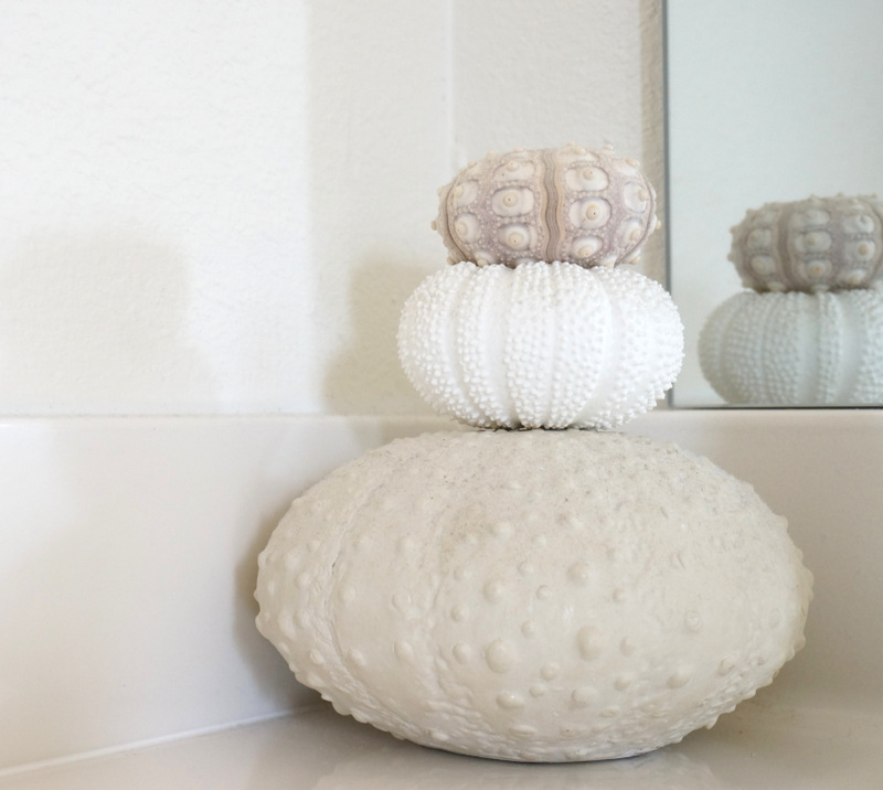 Sea urchin decor in a modern white bathroom