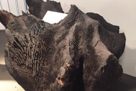 Fossil wood from Serbia used by Toncelli to create unique kitchen islands