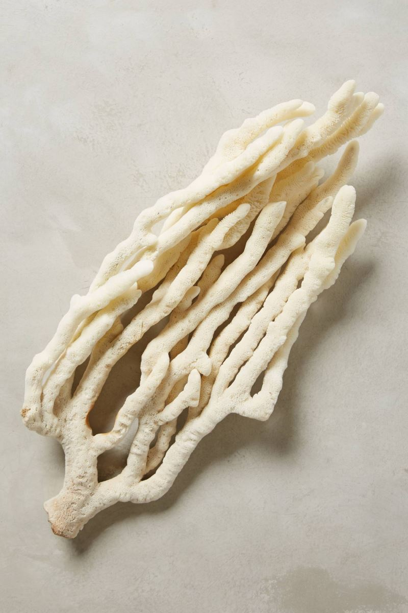 Sculptural sea sponge from Anthropologie