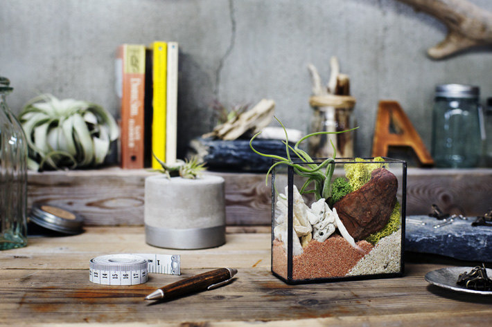 Terrarium kit from Urban Green Makers