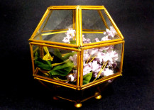 Vintage-geometric-terrarium-217x155