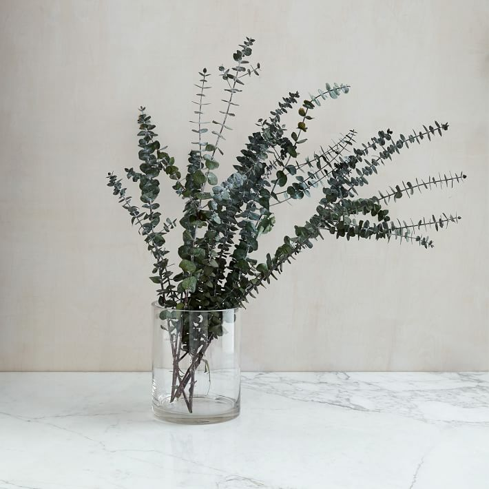 Eucalyptus bundle from West Elm