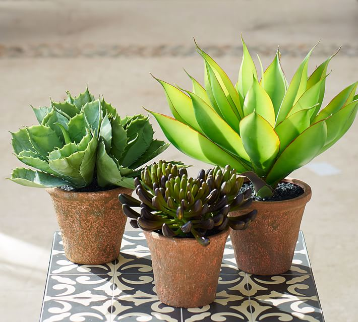 Faux potted succulents from Pottery Barn