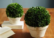 Freeze-dried boxwood from West Elm