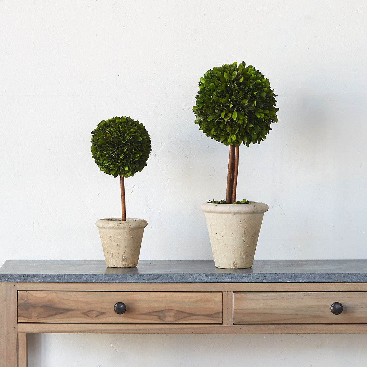 Preserved boxwood topiary from Terrain
