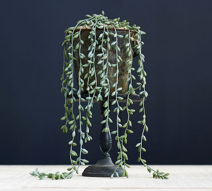 Succulent string from Pottery Barn