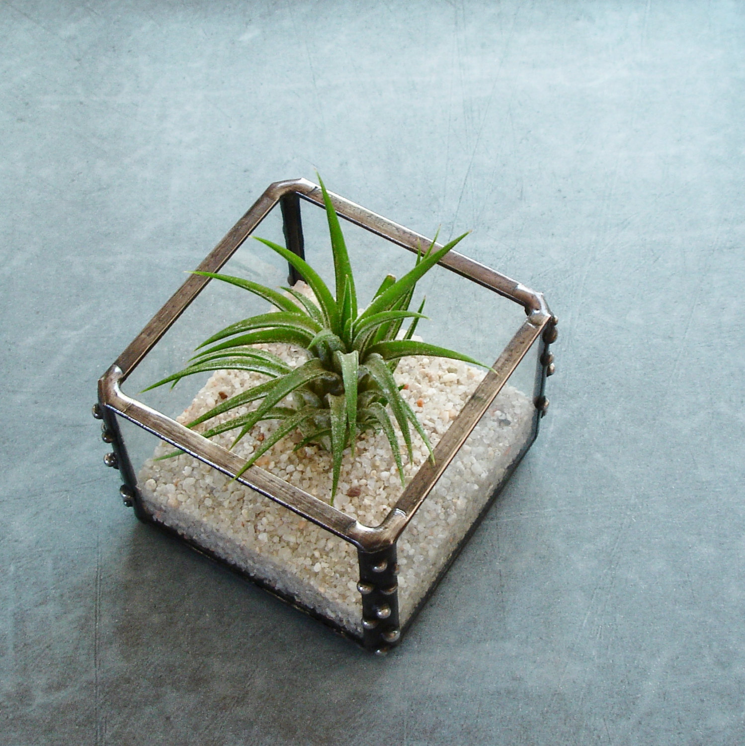 Air plant holder from Etsy shop Jechory Glass Designs
