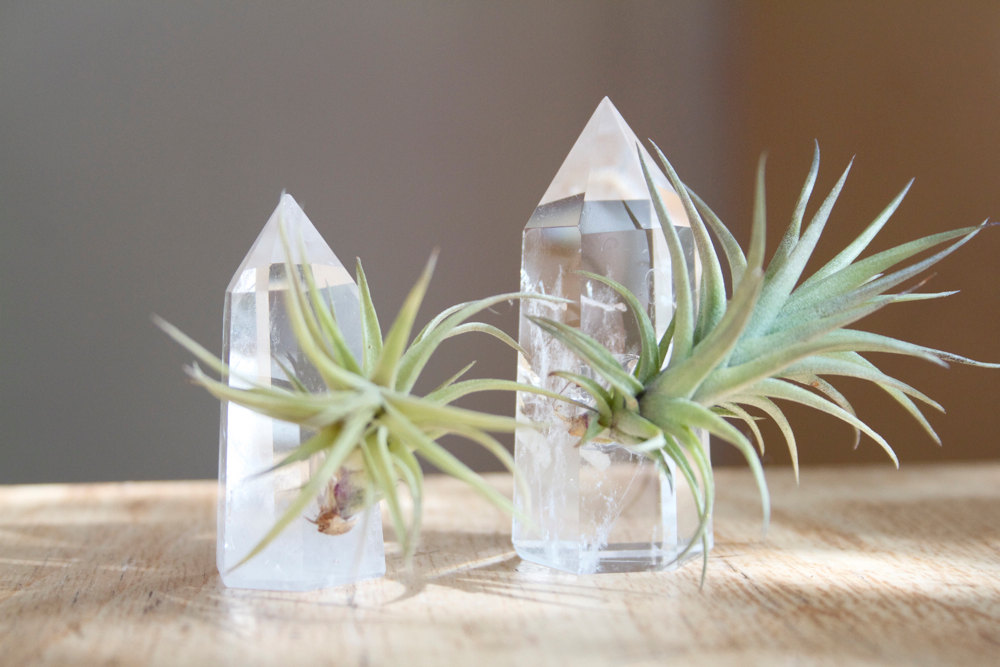Air plants on quartz crystals from Etsy shop Falcon and Finch