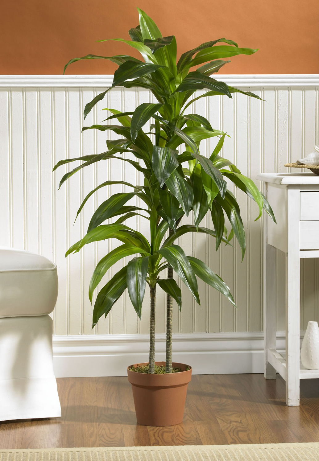 20 Air-Purifying Plants for Your Interior
