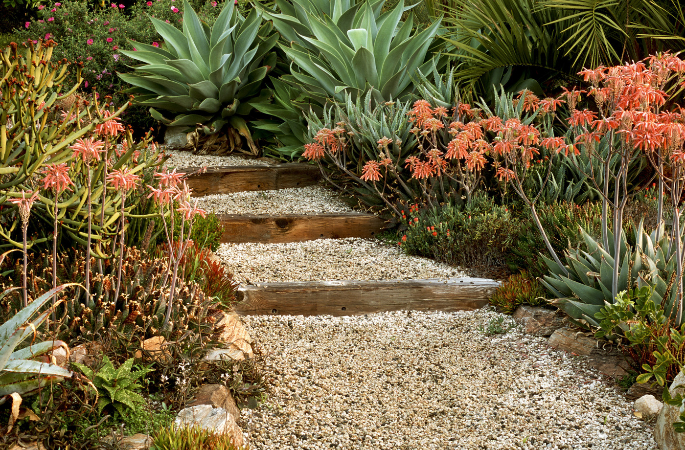 Garden pathway with steps