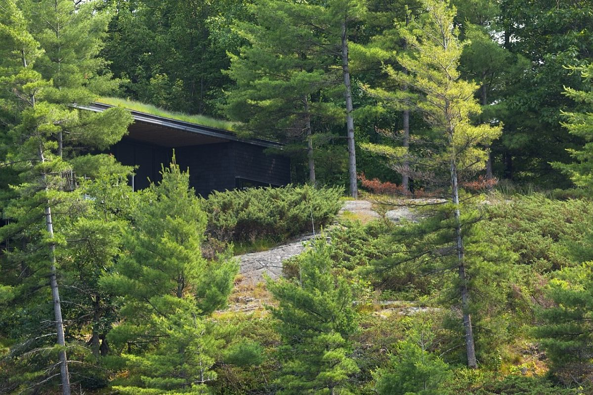 Green roof and dark cedar exterior of the cabin allow it to dissapear into the lush green backdrop