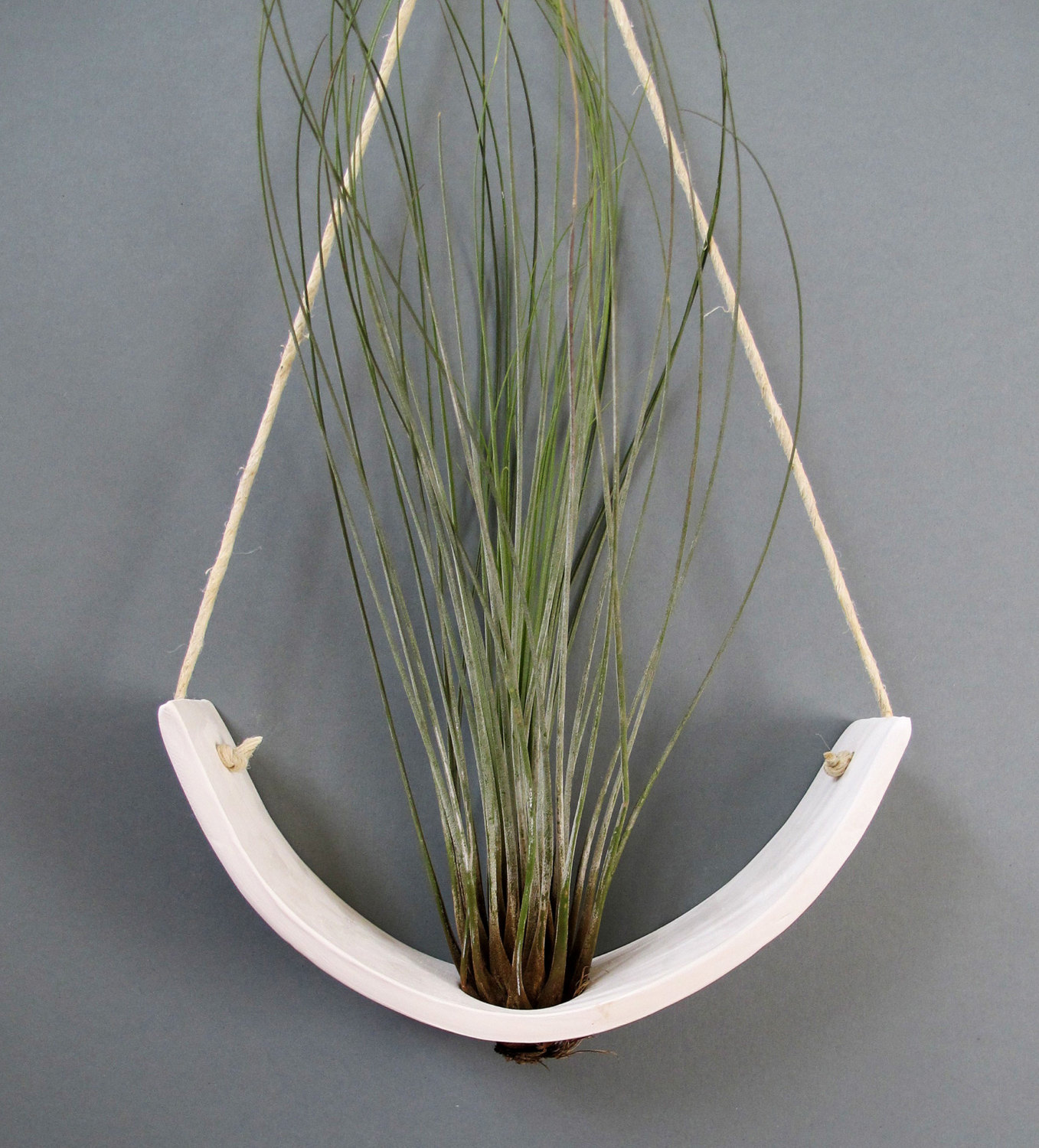 Hanging air plant cradle from Etsy shop mudpuppy