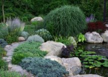 Lush-garden-pond-with-ample-plant-life-217x155