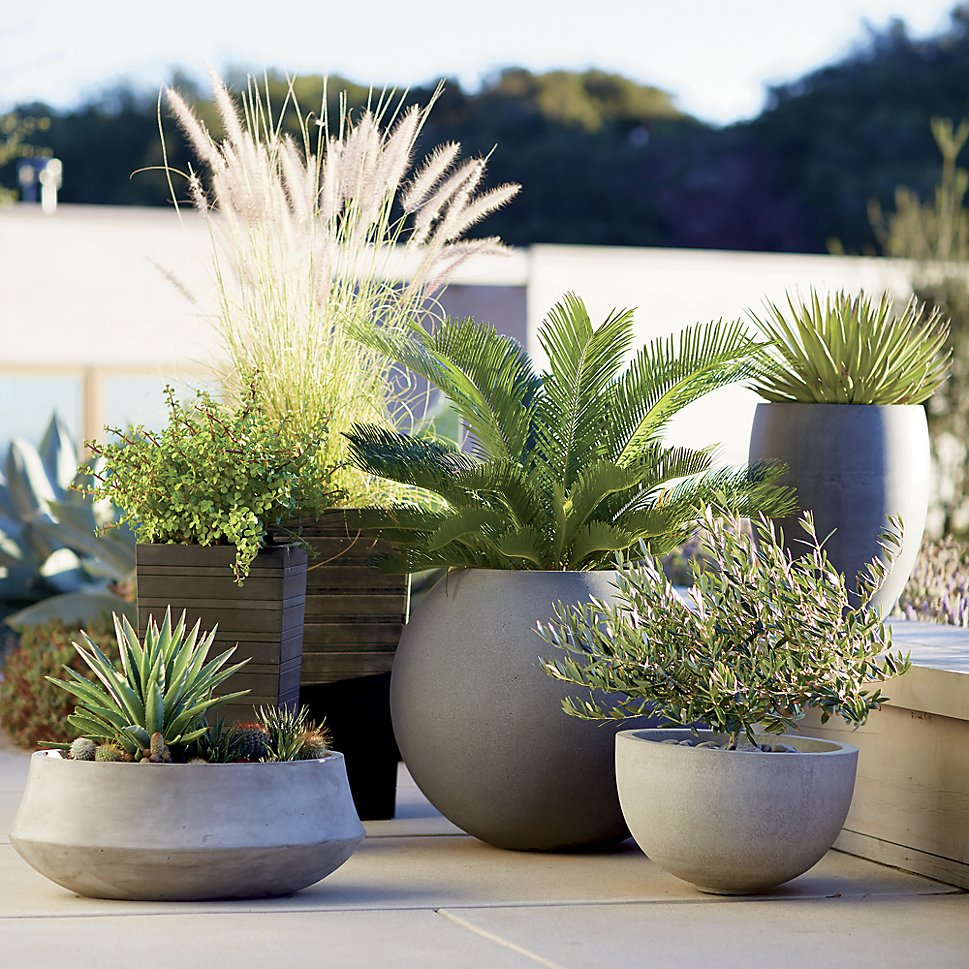 Planters from Crate & Barrel