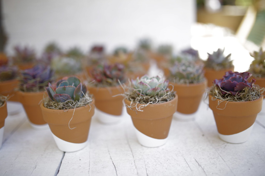 Succulent party favors from Leaf & Clay