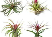 Air-plant-collection-from-Air-Plant-Supply-Co