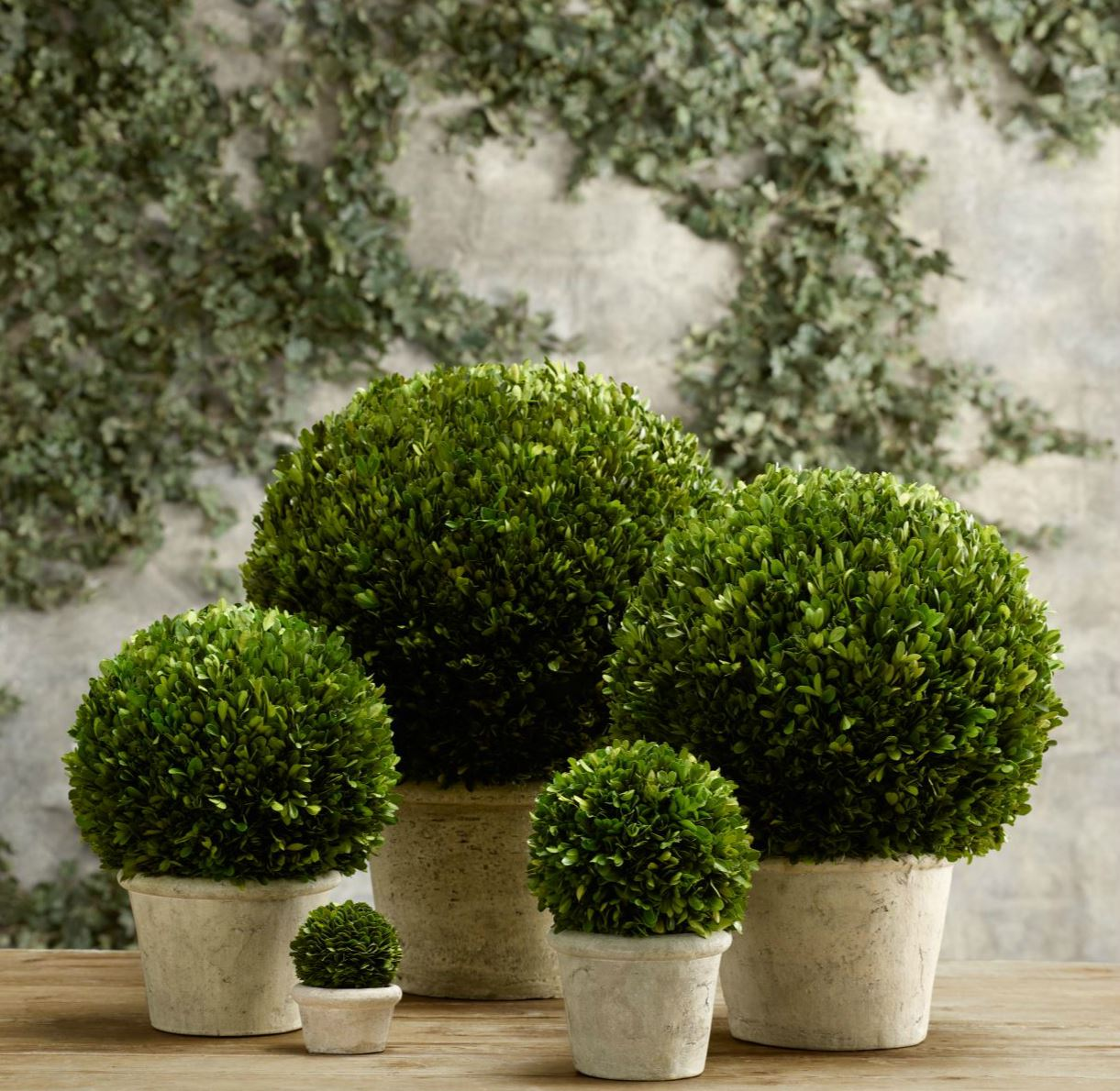 Boxwood globes from Restoration Hardware